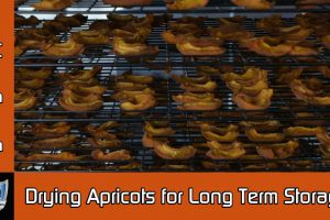 Drying Apricots Longterm Food Storage