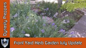 July Herb Garden Update Thumbnail