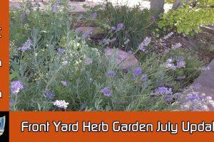 July 2016 Front Yard Herb Garden Update