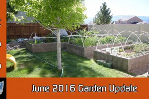 June 2016 Garden Update