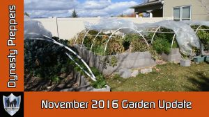 November 2016 Garden Update and Questions Answered