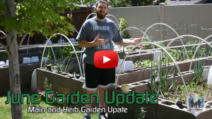 June 2017 Garden Update Thumb