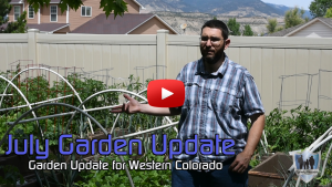 July Garden Update Thumbnail