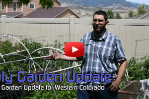 2017 July Colorado Garden Update