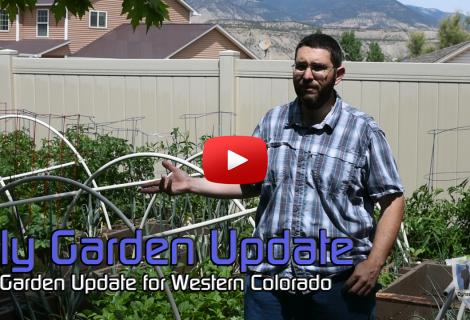 2017 July Colorado Garden Update