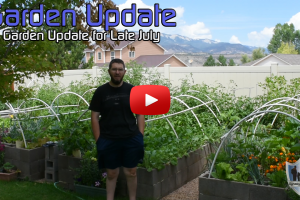Late July Garden Update Western Colorado