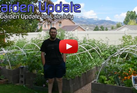 Late July Garden Update Western Colorado