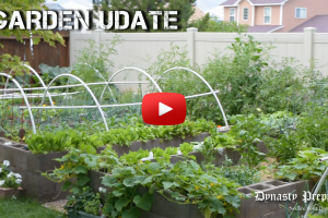 Late July 2018 Colorado Garden Update