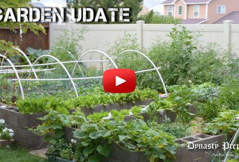 Late July 2018 Colorado Garden Update
