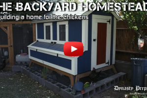 The Backyard Homestead – Building a Home for the Chickens